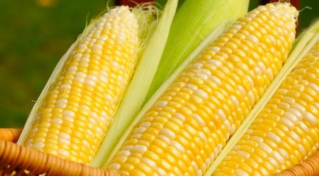 Cena kukuruza na berzi i u prodaji